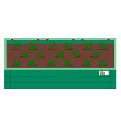 Strawberries growing in wooden box with soil grow vector