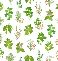 Herbs and spices seamless pattern vector image