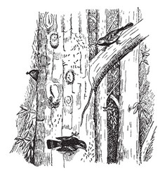 warblers eating caterpillars vintage vector image vector image