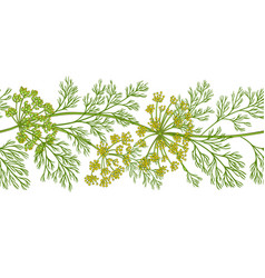 Dill plant pattern on white background vector
