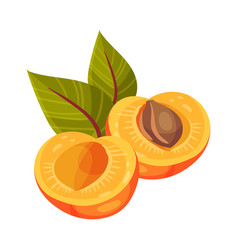 Halved apricot with leaves isolated on white vector