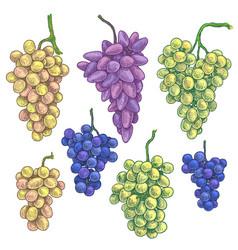 hand drawn grape bunch variety vector image