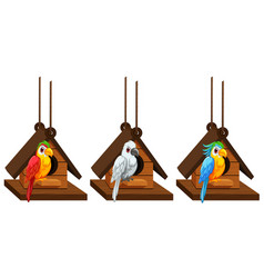 Macaw parrots living in birdhouse vector