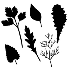 silhouettes of potherb vector image