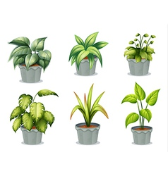 Six leafy plants with pot vector image