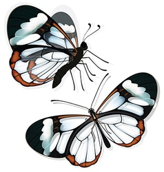 Butterfly with transparent wings vector