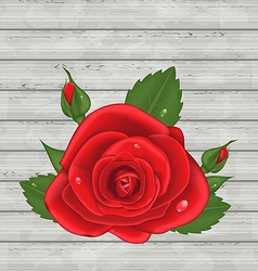 Close-up red rose for Valentine Day on wooden vector image
