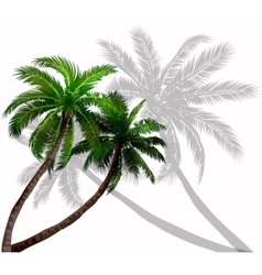 Palm trees with green leaves vector