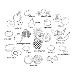 Set of fruit doodles vector