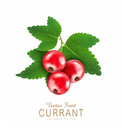 red currant isolated on a white background vector image