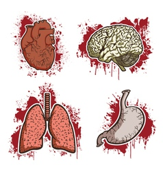 cartoon human organs vector image