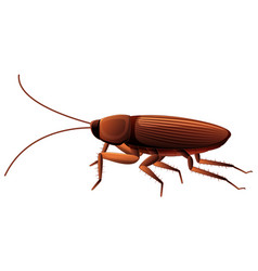 Cockroach on white background vector