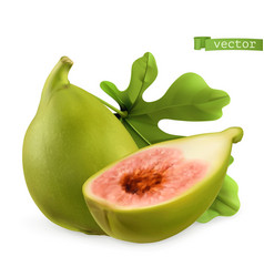 figs 3d realistic icon vector image
