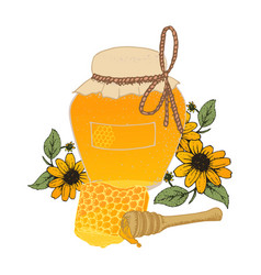 Honey in jar and honeycombs sketches vector