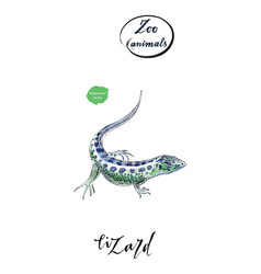 Lizard gecko in watercolor vector