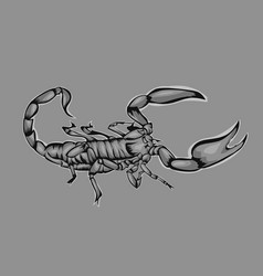 simple design scorpion vector image