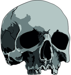 skull handmade drawing vector image