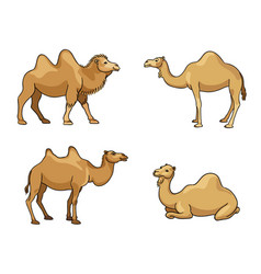 Camels in cartoon style with outlines vector