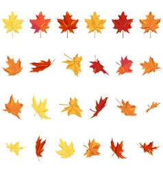 Maple Leaves Set vector