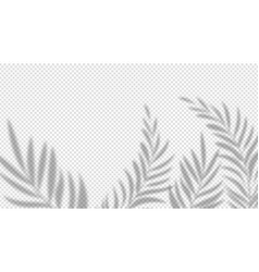 shadow palm leaves overlay plant effect on vector image