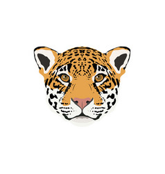 abstract color jaguar head vector image