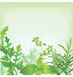 Frame of fresh herbs vector image vector image