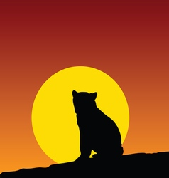 bear on the moonlight color vector image