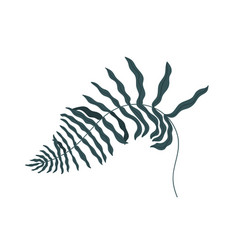 Curved fern frond isolated on white background vector