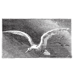 Wandering albatross engraving vector image vector image