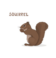a cartoon cute squirrel isolated on a white vector image