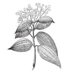 Cinnamon vintage vector