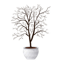 compact domestic tree in ornamental flowerpot vector image