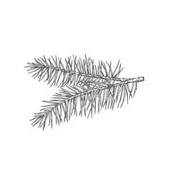 Hand drawn christmas pine twig fir-needle vector