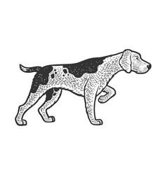 hunting dog hound sketch vector image