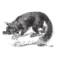 lemur engraving vector image