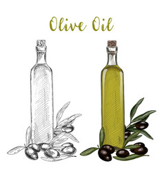 Olive oil branch and glassware bottle with cork vector