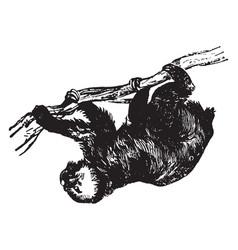 Sloth vintage vector
