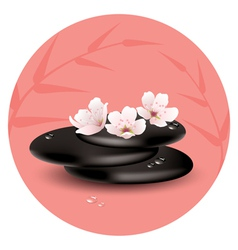 stones and cherry flowers vector image vector image