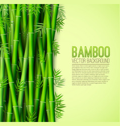 bamboo background concept vector image