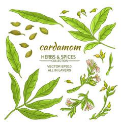 Cardamom elements set vector
