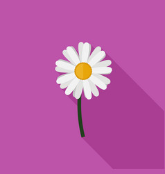 Chamomile flat icon vector