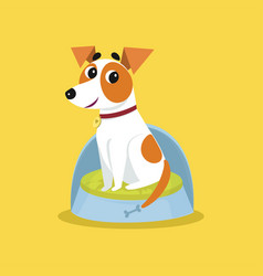 cute jack russell terrier sitting on dogs bed vector image