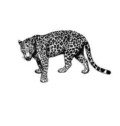Leopard standing graphics hatching vector