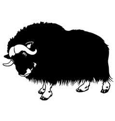 Muskox black white vector