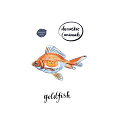 Watercolor orange goldfish vector