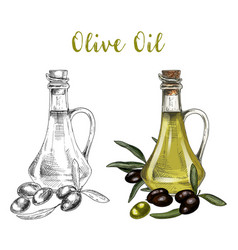 sketch of bottle with olive oil and branch vector image vector image