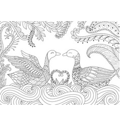two swans playing together vector image vector image