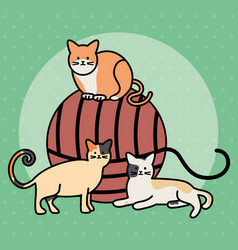 Cute cats mascots with wool ball toy vector