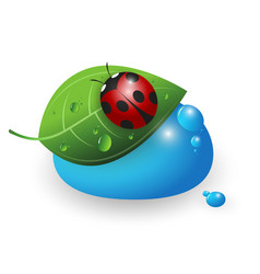 ladybird on a green leaf and a drop of water vector image