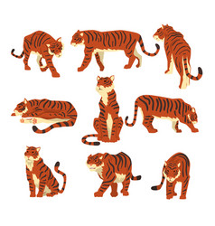 Powerful tiger in different actions set of cartoon vector